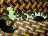 Кошки, котята Неизвестная порода, Фото