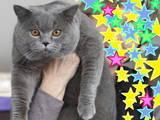 Кішки, кошенята Спаровування, ціна 300 Грн., Фото