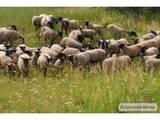 Тваринництво Хутрова тваринництво, ціна 1500 Грн., Фото