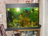 Рыбки, аквариумы Аквариумы и оборудование, цена 1300 Грн., Фото