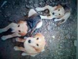 Собаки, щенки Неизвестная порода, цена 2000 Грн., Фото