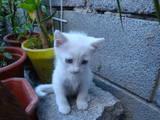 Кошки, котята Неизвестная порода, цена 1 Грн., Фото
