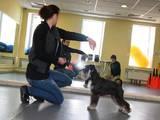 Собаки, щенки Занятия, тренировки, цена 1000 Грн., Фото