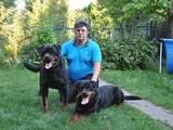 Собаки, щенки Ротвейлер, цена 8500 Грн., Фото