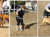 Собаки, щенки Шарпей, цена 11000 Грн., Фото