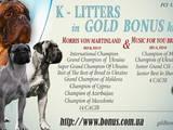 Собаки, щенята Бульмастиф, ціна 20000 Грн., Фото