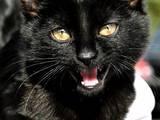 Кошки, котята Беспородная, цена 10 Грн., Фото