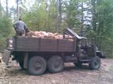 Дрова, брикети, гранули Дрова колоті, ціна 900 Грн., Фото