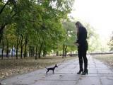 Собаки, щенки Русский гладкошерстный тойтерьер, цена 10500 Грн., Фото