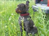 Собаки, щенята Невідома порода, ціна 5000 Грн., Фото