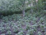 Дачи и огороды АР Крым, цена 700000 Грн., Фото