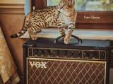 Кішки, кошенята Невідома порода, ціна 230000 Грн., Фото
