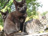 Кошки, котята Беспородная, цена 0.50 Грн., Фото