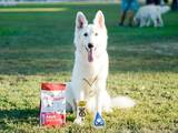 Собаки, щенки Белая Швейцарская овчарка, цена 14000 Грн., Фото