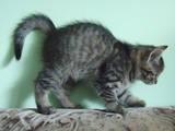 Кішки, кошенята Невідома порода, ціна 1 Грн., Фото