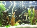 Рибки, акваріуми Акваріуми і устаткування, ціна 3500 Грн., Фото
