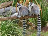 Тварини Екзотичні тварини, ціна 62500 Грн., Фото