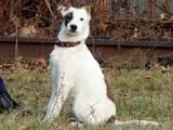 Собаки, щенки Неизвестная порода, цена 100 Грн., Фото