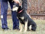 Собаки, щенята Невідома порода, ціна 100 Грн., Фото