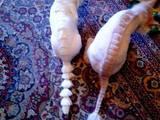 Собаки, щенки Лхаса апсо, цена 130 Грн., Фото