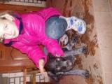 Собаки, щенята Дірхаунд, ціна 13000 Грн., Фото