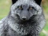 Тварини Різне, ціна 10 Грн., Фото