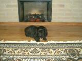 Собаки, щенки Ньюфаундленд, цена 3800 Грн., Фото