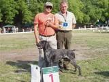 Собаки, щенки Немецкая гладкошерстная легавая, цена 6500 Грн., Фото