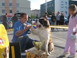 Собаки, щенята Сенбернар, ціна 9000 Грн., Фото