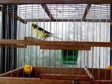 Попугаи и птицы Клетки  и аксессуары, цена 200 Грн., Фото