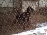 Собаки, щенята Різне, ціна 6000 Грн., Фото