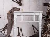 Собаки, щенята Веймарська лягава, ціна 17000 Грн., Фото