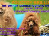 Собаки, щенки Карликовый пудель, цена 4000 Грн., Фото