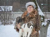 Собаки, щенята Кавказька вівчарка, ціна 2000 Грн., Фото