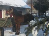 Животные Разное, цена 10000 Грн., Фото