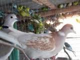 Папуги й птахи Різне, ціна 75 Грн., Фото