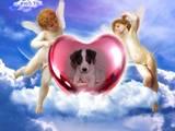 Собаки, щенки Джек Рассел терьер, цена 9990 Грн., Фото