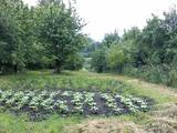Другое... Огороды, цена 290000 Грн., Фото