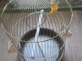 Папуги й птахи Клітки та аксесуари, ціна 350 Грн., Фото