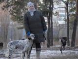 Собаки, щенки Английский сеттер, Фото