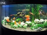 Рибки, акваріуми Установка і догляд, ціна 200 Грн., Фото