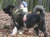 Собаки, щенки Кавказская овчарка, цена 2000 Грн., Фото