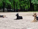 Собаки, щенята Заняття, тренування, ціна 70 Грн., Фото