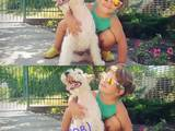 Собаки, щенки Жесткошерстный фокстерьер, цена 3500 Грн., Фото