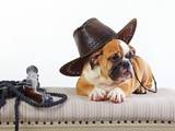 Собаки, щенки Английский бульдог, цена 15000 Грн., Фото