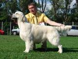 Собаки, щенки Золотистый ретривер, цена 10000 Грн., Фото