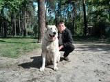 Собаки, щенки Среднеазиатская овчарка, цена 10500 Грн., Фото