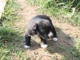 Собаки, щенки Неизвестная порода, цена 1 Грн., Фото