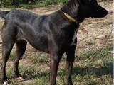 Собаки, щенята Невідома порода, ціна 1 Грн., Фото