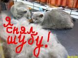 Собаки, щенки Пекинес, цена 140 Грн., Фото
